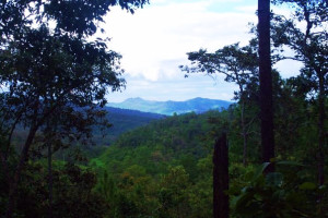 Chiang Mai jungle photo