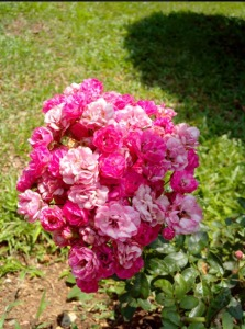 Flowers At The Spa Resort Chiang Mai 1 223×300