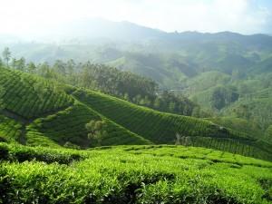bebenefits of drinking green tea