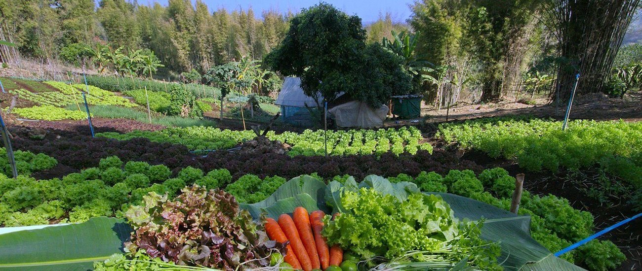 organic farm at our healthy holiday
